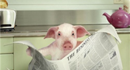 The Bath Echo and The Pig Guide: a perfect partnership!
